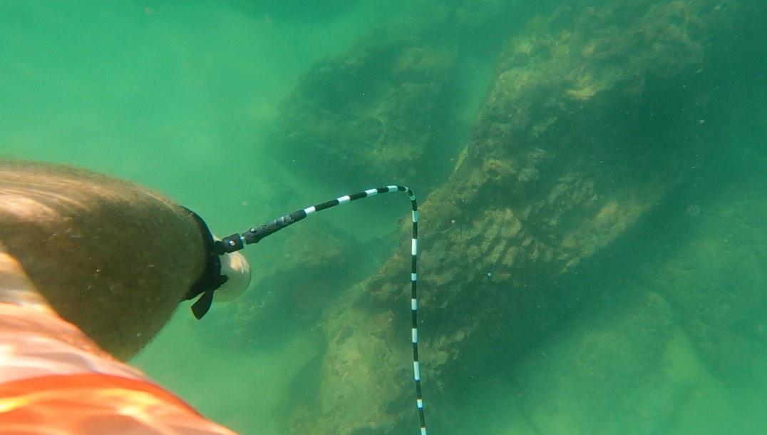 Zebra Legrope Striped Surf Leash Shark Deterrent